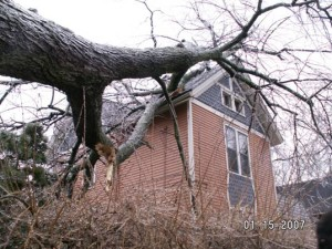 ash tree killed by EAB; Ann Arbor, MI; courtesy of Major Hefje